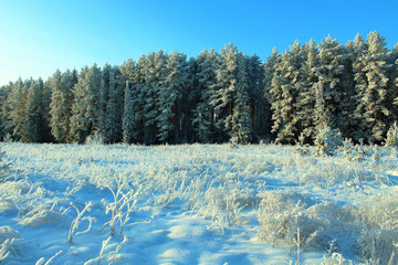 Beautiful white snow-covered forest. Winter landscape. Background.
