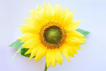 Beautiful romantic sunflower flower sea