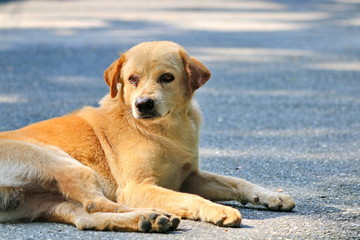 Dogs that are lying on the road naturally.