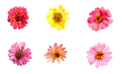 Flowers are pink petals. And another with yellow petals. On the white background. Isolated flowers picture.