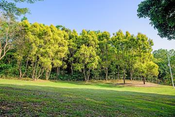 Spring Park / Shenzhen Beacon Hill Park