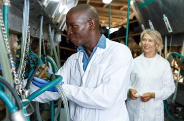 Man working at milking line