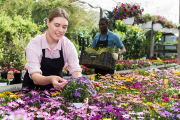 Florist girl working in greenhouse