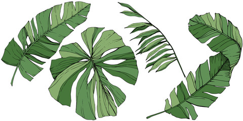Vector Exotic tropical hawaiian summer. Green engraved ink art. Isolated leaf illustration element.