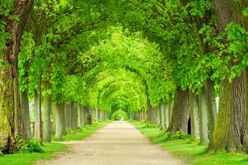 Park mit tunnelartiger Lindenallee im Frühling, frisches grünes Laub