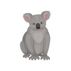 Detailed flat vector icon of cute gray koala bear. Australian marsupial animal. Wild creature