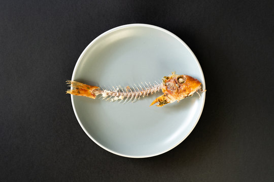 Skeleton of consumed fish