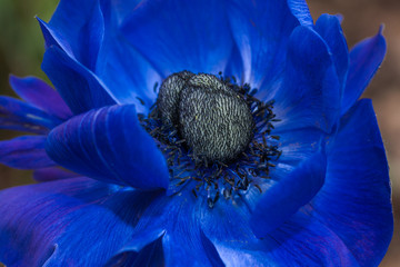 Königliches Blau - royal blue