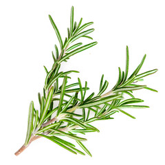 Rosemary organic  herb isolated on the white background, macro.