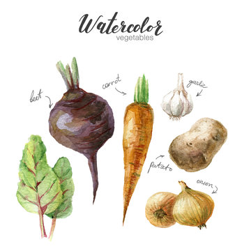 Set of watercolor vegetables. food hand drawn set with Beets, onion, potato, carrot, garlic