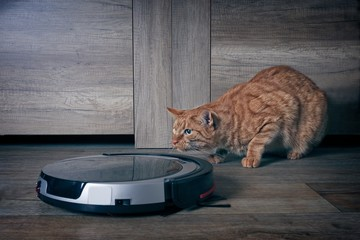 Funny ginger cat lurking  behind a robot vacuum cleaner