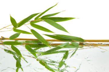 branches and green and fresh bamboo leaves reflected on mirror and water with white background,...
