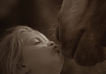 Girl kissing a horse close up