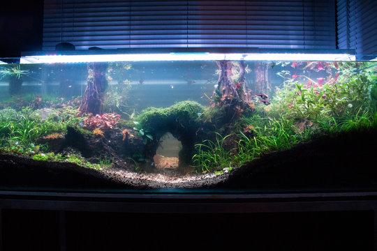 240 L planted aquascape with a wooden bridge
