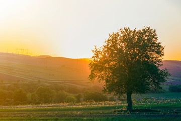 Quiet and peaceful view of beautiful big green tree at sunset growing alone in spring field on distant hills bathed in orange evening sunlight and high voltage lines stretching to horizon background.