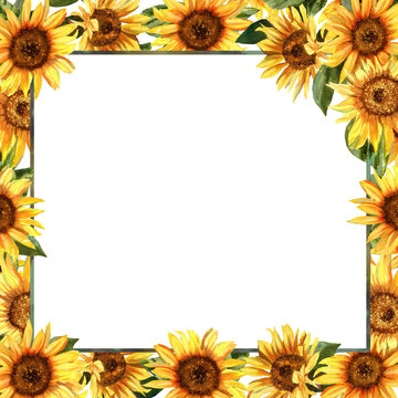 Frame with wonderful sunflowers. Hand drawn watercolor