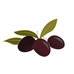Vector illustration of ripe olives and leaves. Isolated design element.