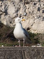 Gull Number 1, Rottingdean, East Sussex, UK