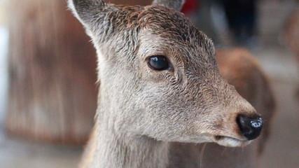 Printed roller blinds Deer deer