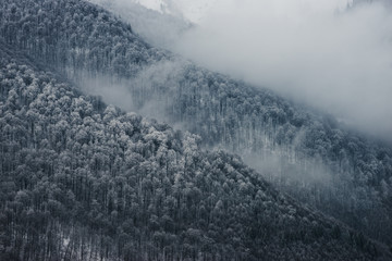 Winter forest in the clouds