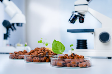 Modern Laboratory .Vegetables in hydroponics  tech picks