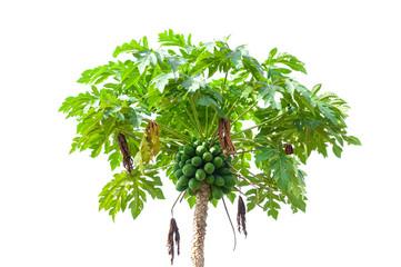 Papaya tree isolated on white background