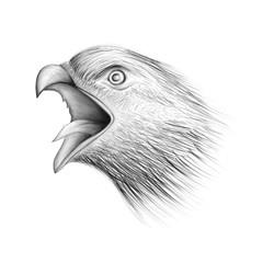 Screaming eagle with open hawk portrait drawing