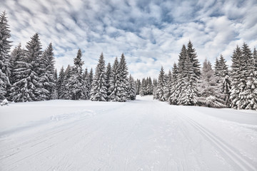 Winter landscape with cross-country skiing trails, Jakuszyce, Poland.