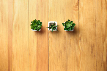 Pots with succulents on wooden table