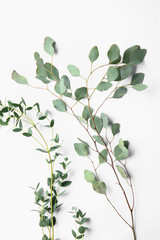 Branches of tropical plants on white background