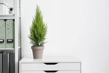 Green cedar tree on white commode in office