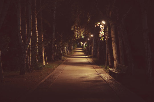 road in the Park at night