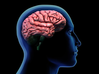 Profile of Man with Cerebrum Highlighted in Brain