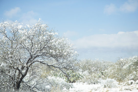 Photograph of the Arizona desert covered with snow