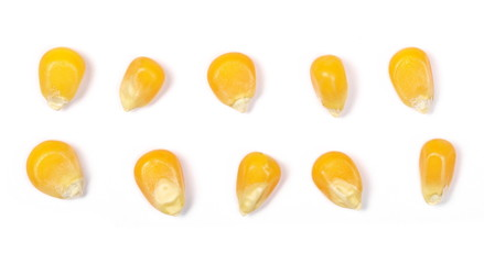 Set yellow grain corn isolated on white background, for popcorn, macro top view