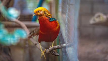 Bird Animal Wildlife
