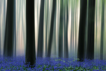 spring forest covered with bluebell wildflowers with motion blur on the tree trunks.
