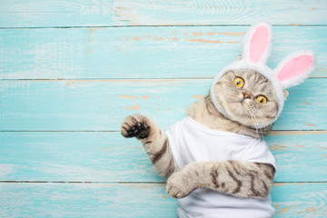 Easter cat with rabbit ears. Banner, Easter screensaver for design