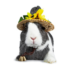Cute grey with white European rabbit, Stting wearing a straw hat with sun flowers. Looking straight at camera facing front. Isolated on white background.