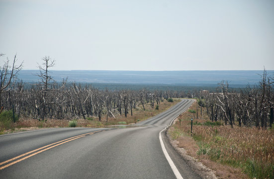 Empty street in death forest after wildfire in southwest USA