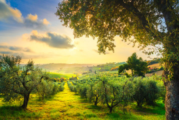 Maremma countryside panorama and olive trees on sunset. Casale Marittimo, Pisa, Tuscany Italy Wall mural