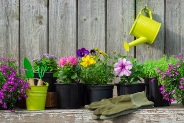 Seedlings of garden plants and flowers in flowerpots. Garden equipment: watering can, buckets, shovel, rake, gloves. Copy space for text.