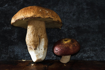 Forest mushrooms on a black background