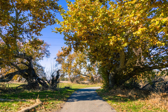 Paved walking path in Sycamore Grove Park, Livermore, East San Francisco bay, California