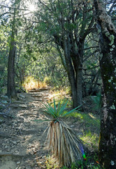 hiking path in Southern Arizona forest