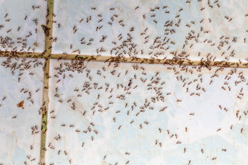 Ants in house on the wall angleants walk on the tile floor.