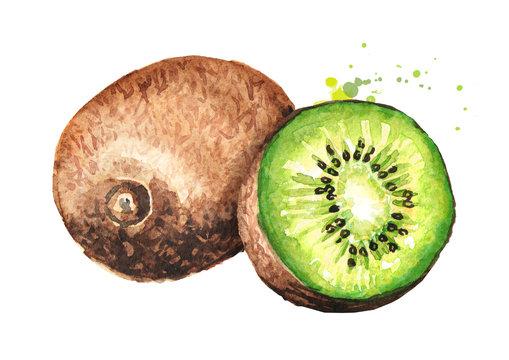 Ripe whole kiwi fruit and half kiwi fruit. Watercolor hand drawn illustration  isolated on white background