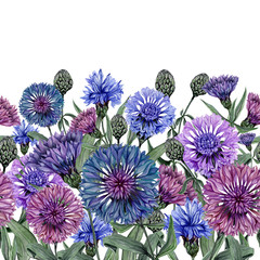 Beautiful centaurea flowers with green leaves on white background. Seamless floral pattern, border. Watercolor painting. Hand drawn and painted illustration.