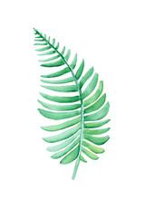 Simple watercolor green fern