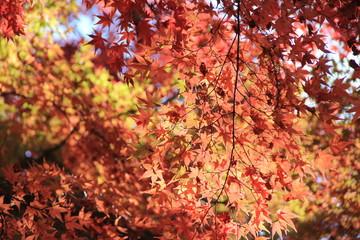 秋の風景/紅葉(宮城県)